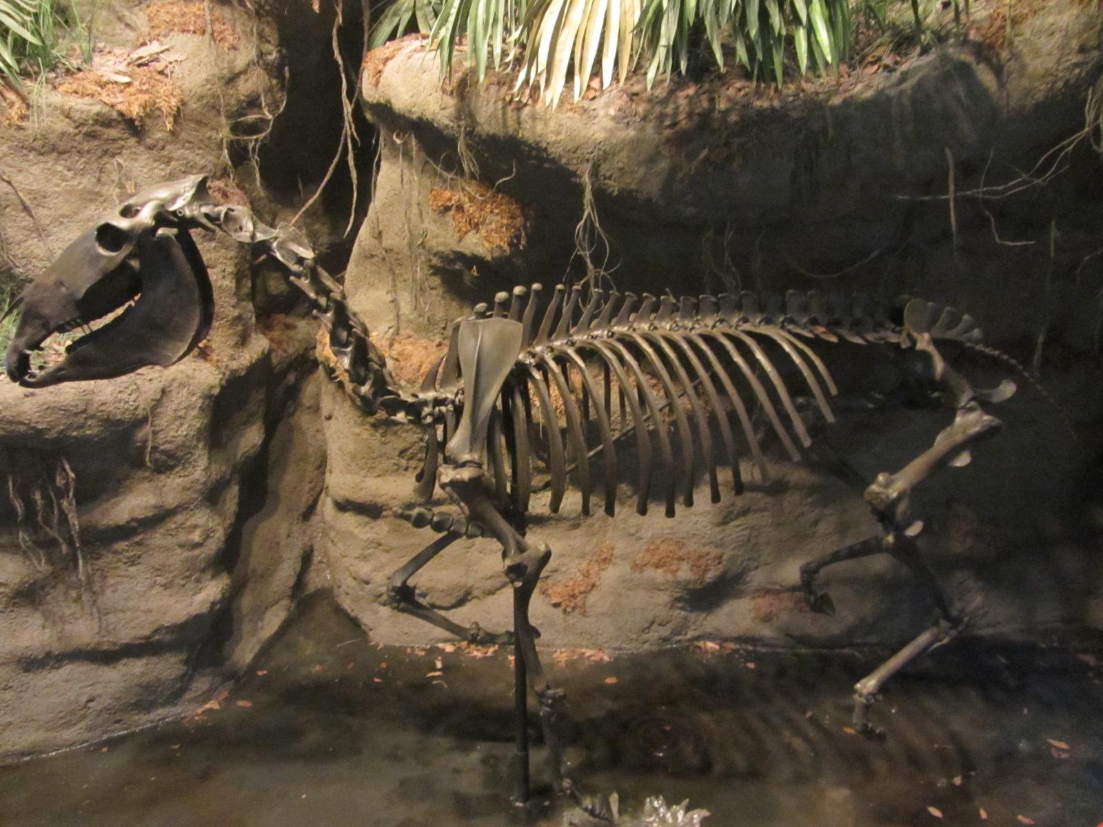 dieren uit de prehistorie